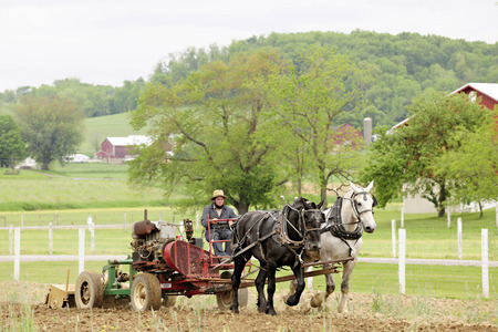 Amish landmand