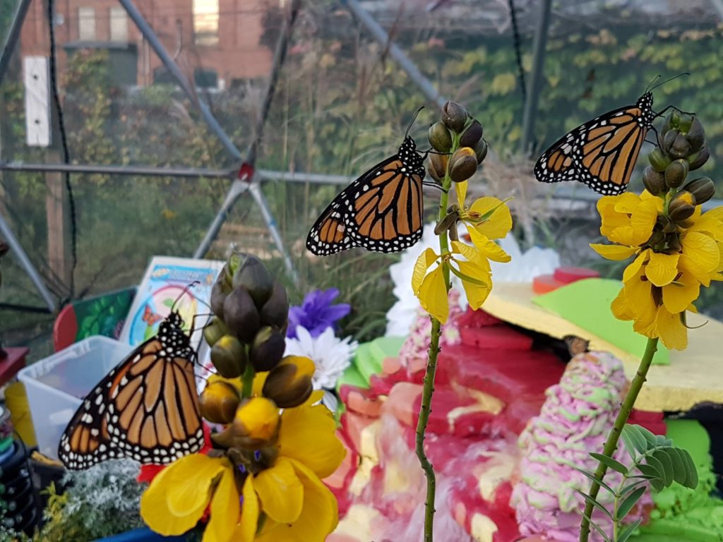 Live butterflies in Butterfly Dome at IngenuityFest 2017
